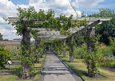 Rose Pergola in the Order Beds at Kew Gardens, London, U.K.