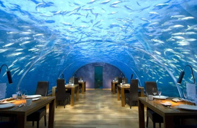 Guests at the Ithaa Undersea Restaurant dine under a clear, vaulted ceiling that offers panoramic views of marine life.
