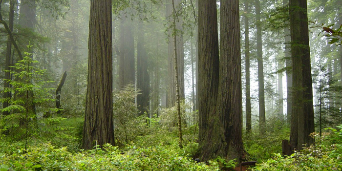 Redwood National & State Parks, Humboldt County & Del Norte County, California, U.S.A.